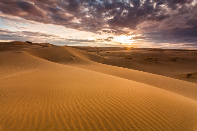 Golden sands and dunes of the desert. Mongolia.